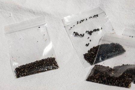 014. Pliculet cu seminte de lavanda